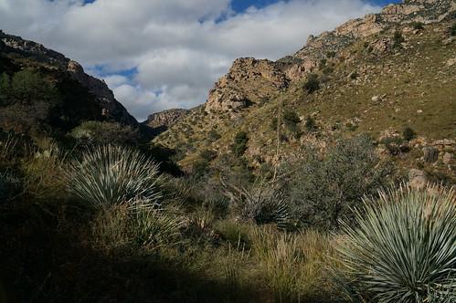 arizona cactus tucson canyon saguaro ocotillo ventanacanyon maidenpools ventanacanyontrail turtleslava2014