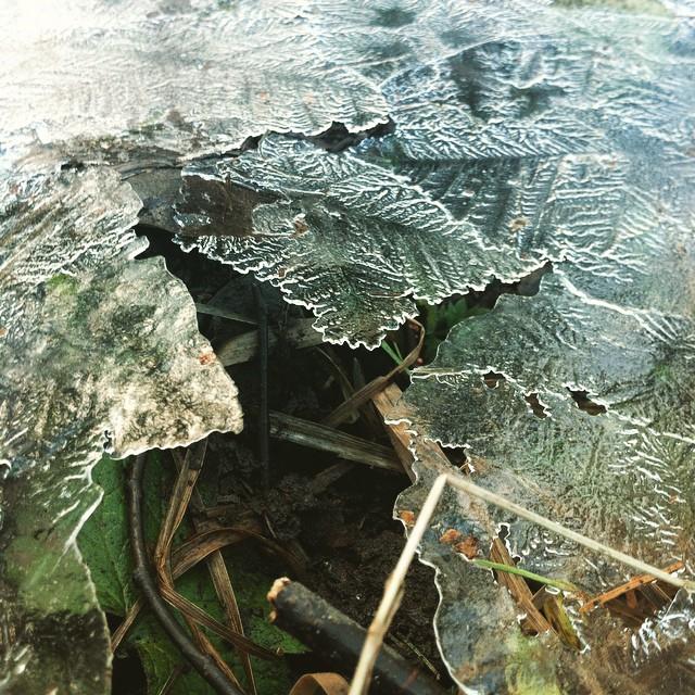 I dag har vi trampat sönder all is. Snart vår!
