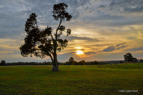 sunset tree nature landscape virginia oldtree manassas manassasbattlefield