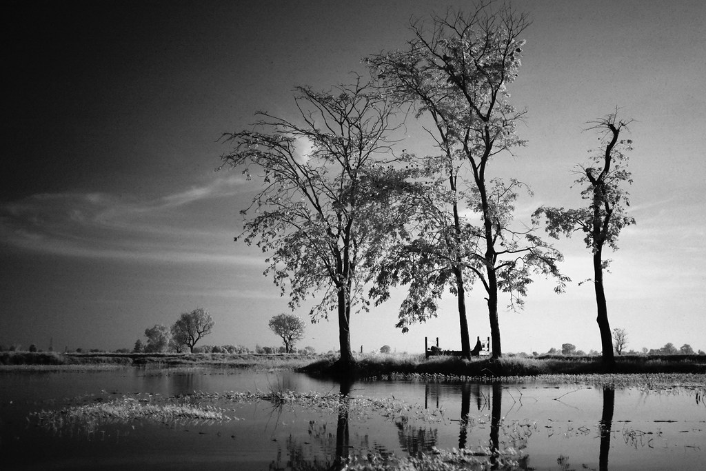 10 Tree lake front processed BW FUJI