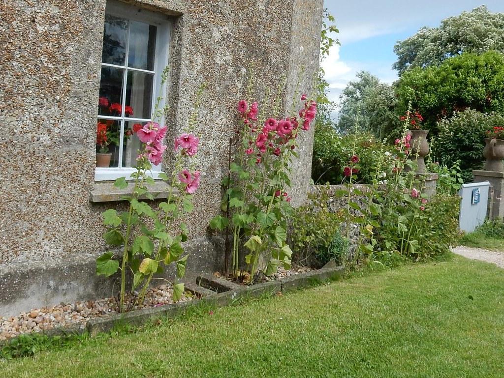 Hollyhocks, Charleston farmhouse Lewes to Berwick