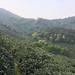Long Jing Shi Feng garden