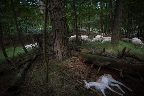 bambi dood
