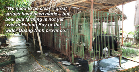 What next for the bears of Halong Bay?