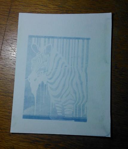11.  Cyanotypes - Zebra