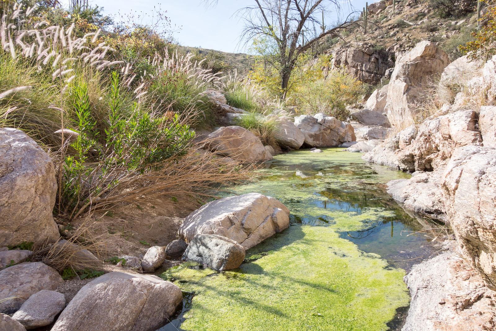 1412 Agua Caliente Canyon