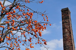 Brick chimney and persimmon in Tokoname 2014.12 No.1.