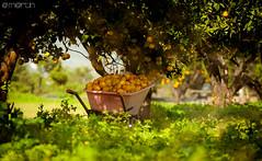 Naranjasss