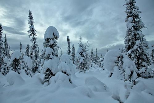 winter snow alaska clouds overcast fairbanks borealforest