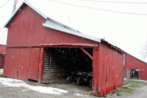 306/365 Snow - November 16