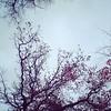 Not #autumn not yet #winter