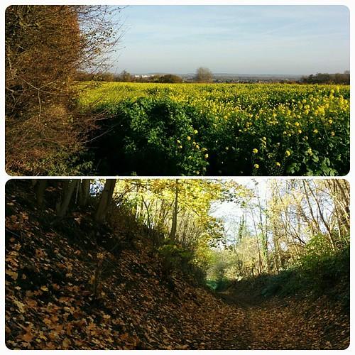 Korte maar stevige wandeling gemaakt. Eekhoorntje en herfstkleurtjes en zon gezien. Me happy. #bergop #herfsthappy