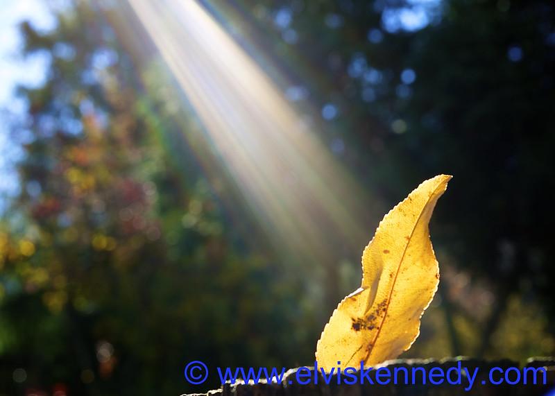 God Light on Leaf