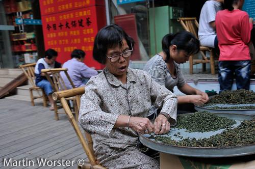 Tea Picker, Xiamen, China -