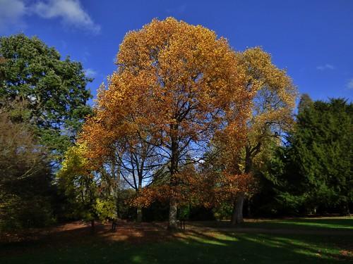 Autumn in the Gardens of Whythenshawe Hall near Manchester, England - November 2014