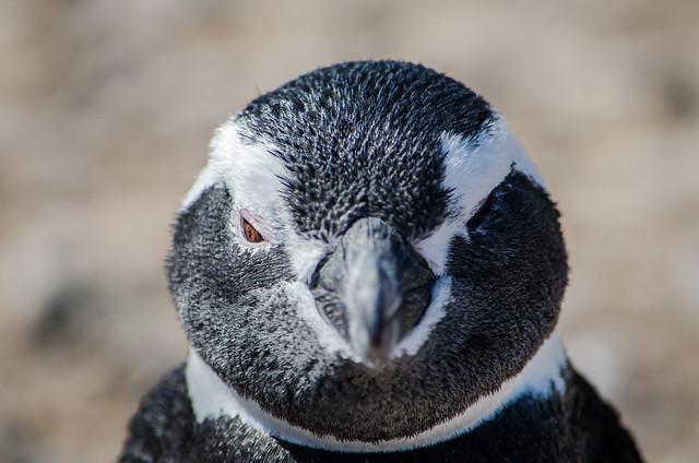 Winking Penguin