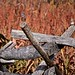 Small photo of Bloody Lane, Antietam