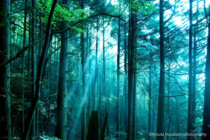 misty_forest2