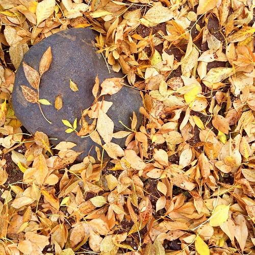 Fallen leaves 🍂