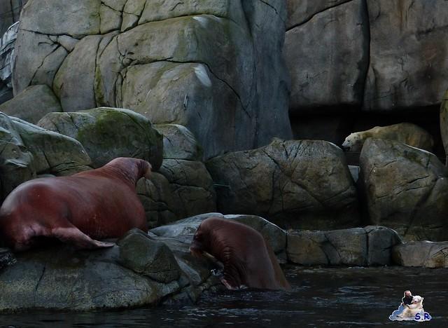 Tierpark Hagenbeck 171