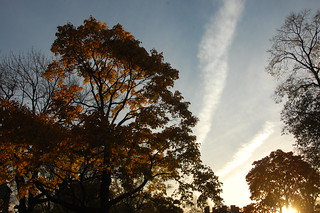 Fall Sunset in Cambridge Common, Harvard Square