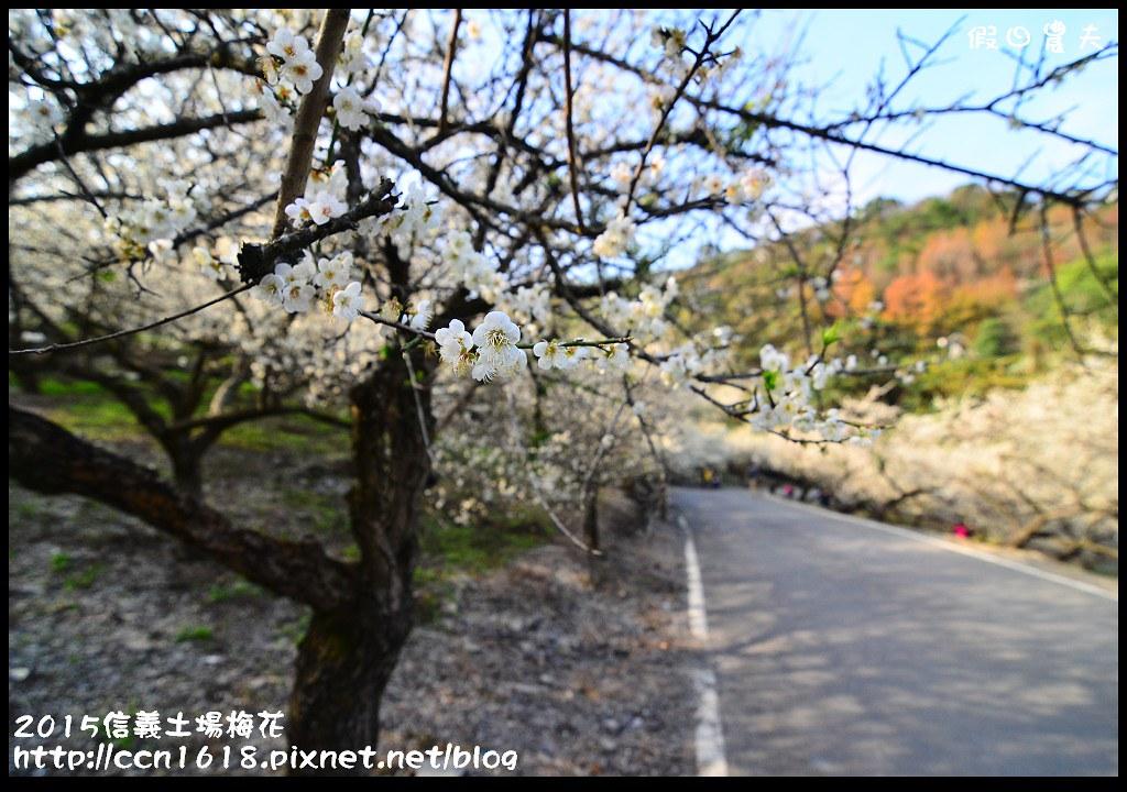 2015信義土場梅花DSC_9311