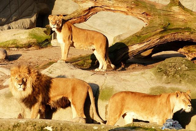 Tierpark Hagenbeck 17.98 _wm