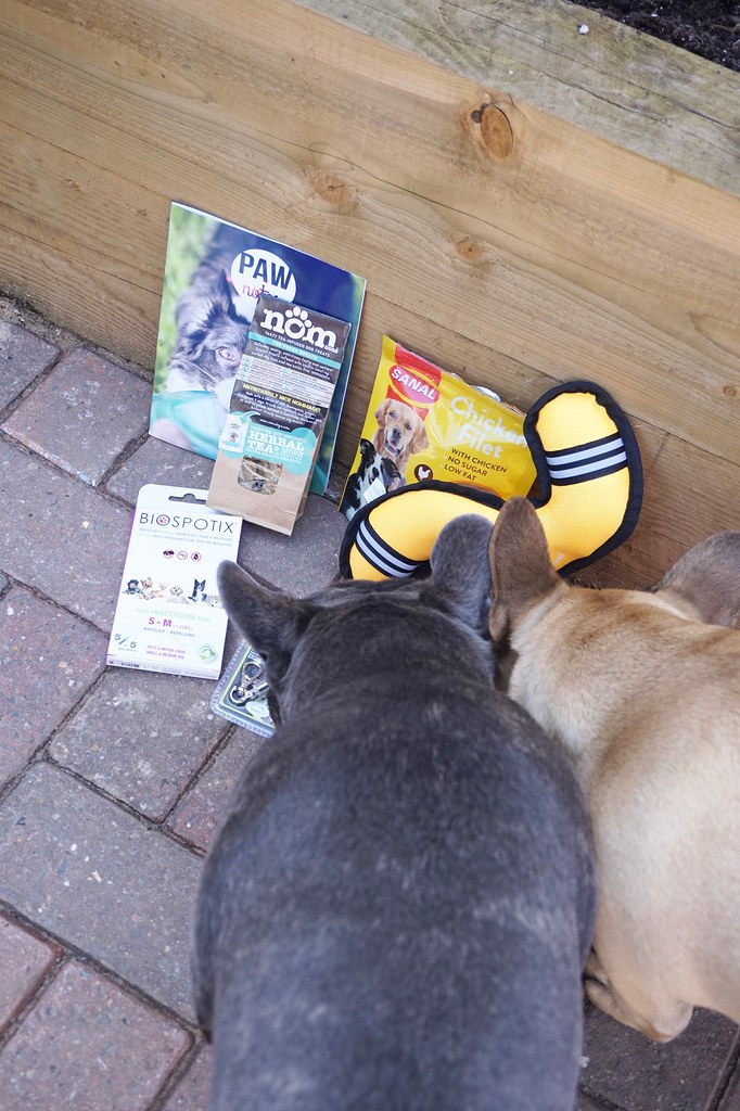 pawsome, pawsome box, pawsome box review,pet subscription box,betty and burt, french bulldog, french bulldog puppy, frenchies, katelouiseblog,