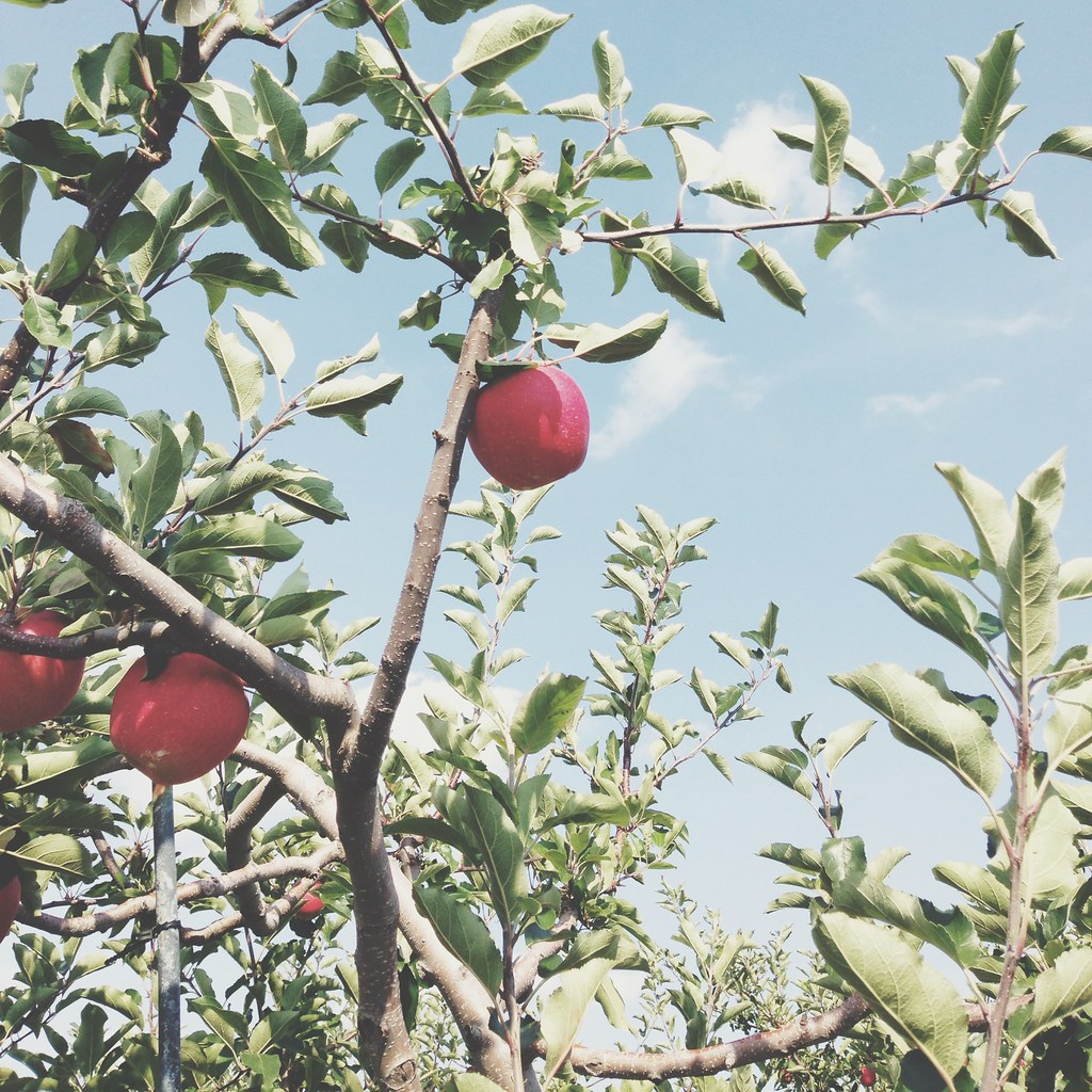 Apples in the Sky | personallyandrea.com