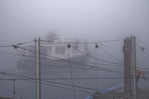 November Fog [explore 2014-11-21]