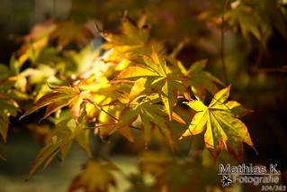Herbst | Projekt 365 | Tag 304