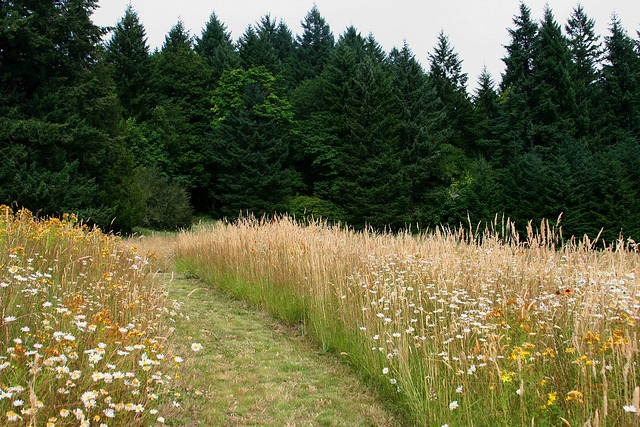 19_meadow path