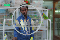 The Man and the Birds