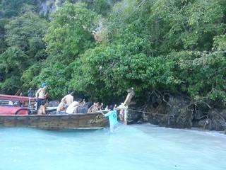 Turistas acosando al mono
