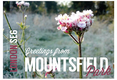 Mountsfield greetings flower postcard by James Blackman
