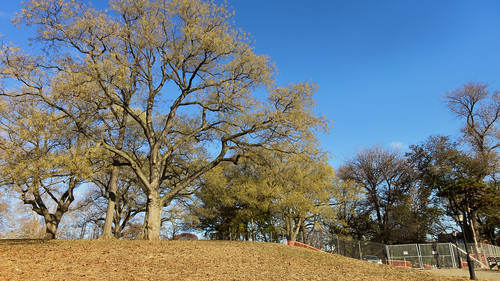 Ft. Greene Park, BK