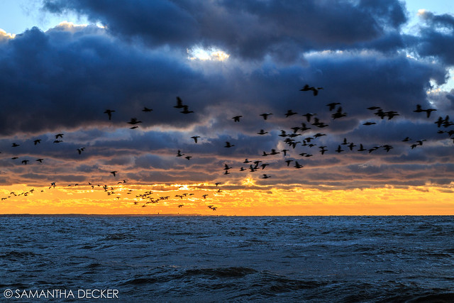 Birds Fly Over Cape Cod Bay