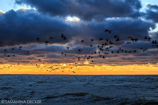 Birds Fly Over Cape Cod Bay