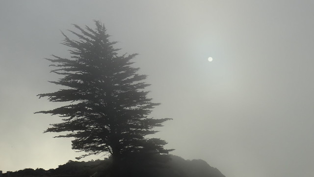 Tree and sun in the fog