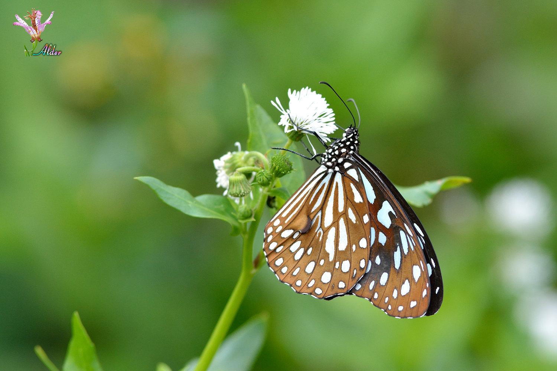 Butterfly_9075