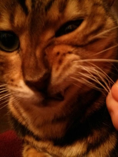Whiskers & Paws: March 2015 Edition