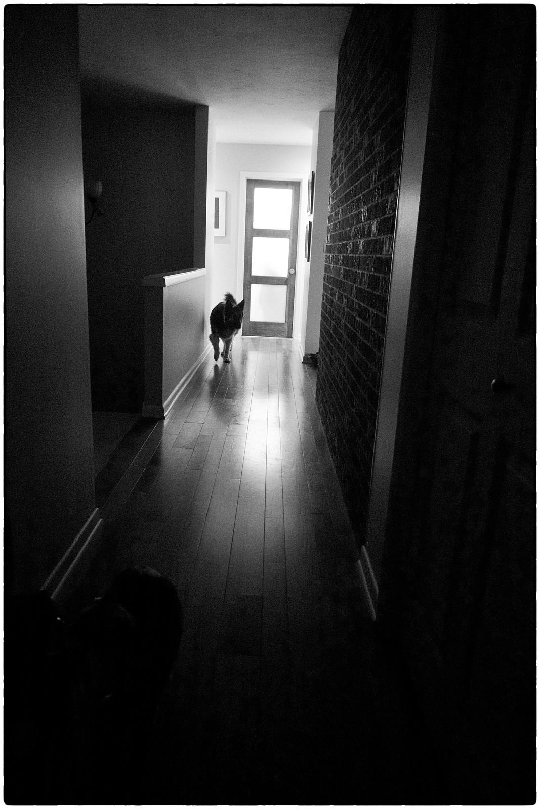 Tasha Hallway, December 21, 2104