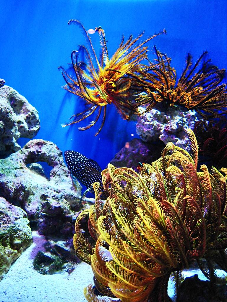 Chura-umi Aquarium