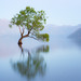 Bird In A Lone Willow Tree On Lake Wanaka (Explore #1) by glness