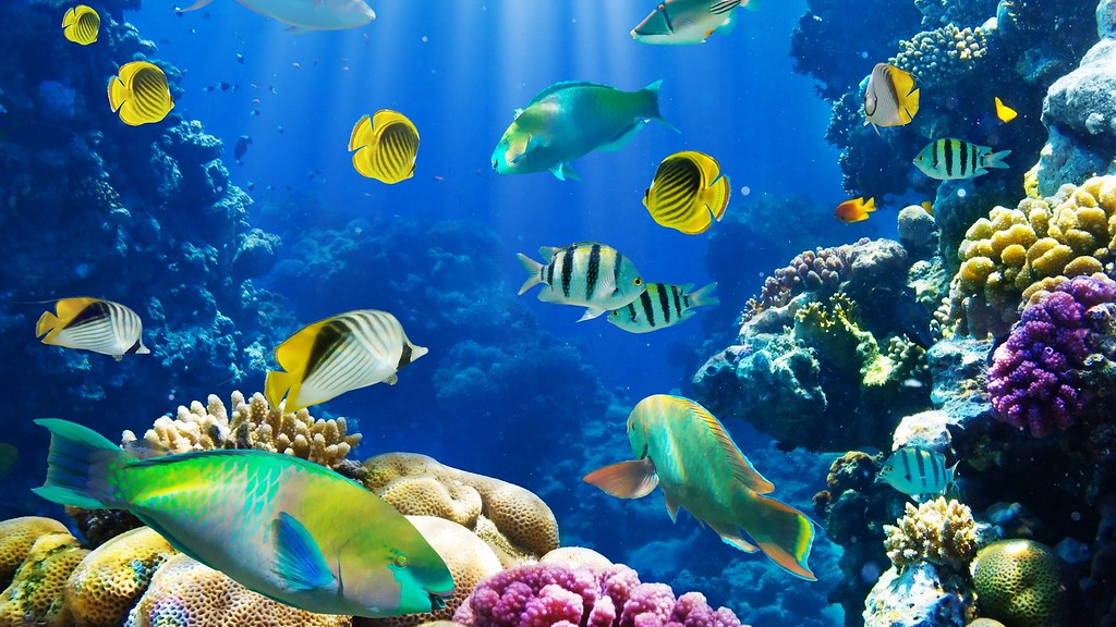 New study finds ocean wildlife may end soon for Mural hidupan laut
