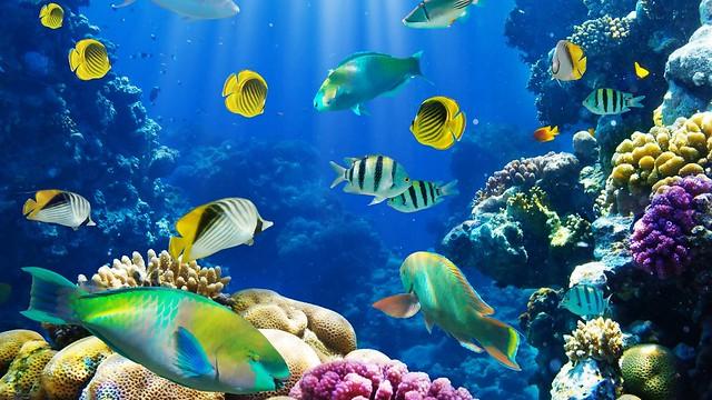 Oceanfish