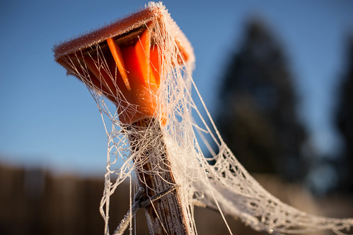 morning blue orange cold oregon frost spiderweb cobweb rime rogueriver