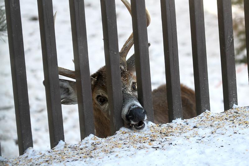 clever deer6