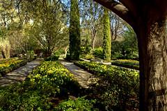de mis paseos por el Jardín Botánico de Madrid