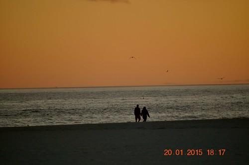 shadow beach water birds waves gulfshoresal